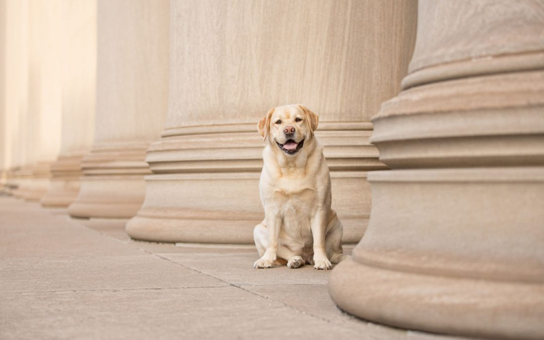 How to Market Your Pet Photography Business – Part 1 of 4 Charitable Marketing