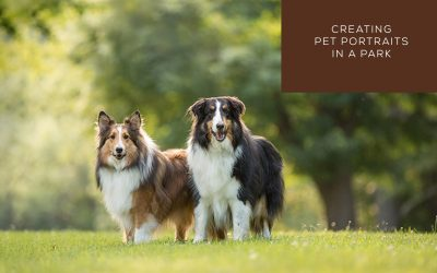 Creating Pet Portraits in a Park