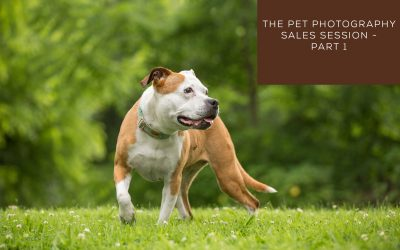 The Pet Photography Sales Session – Part 1