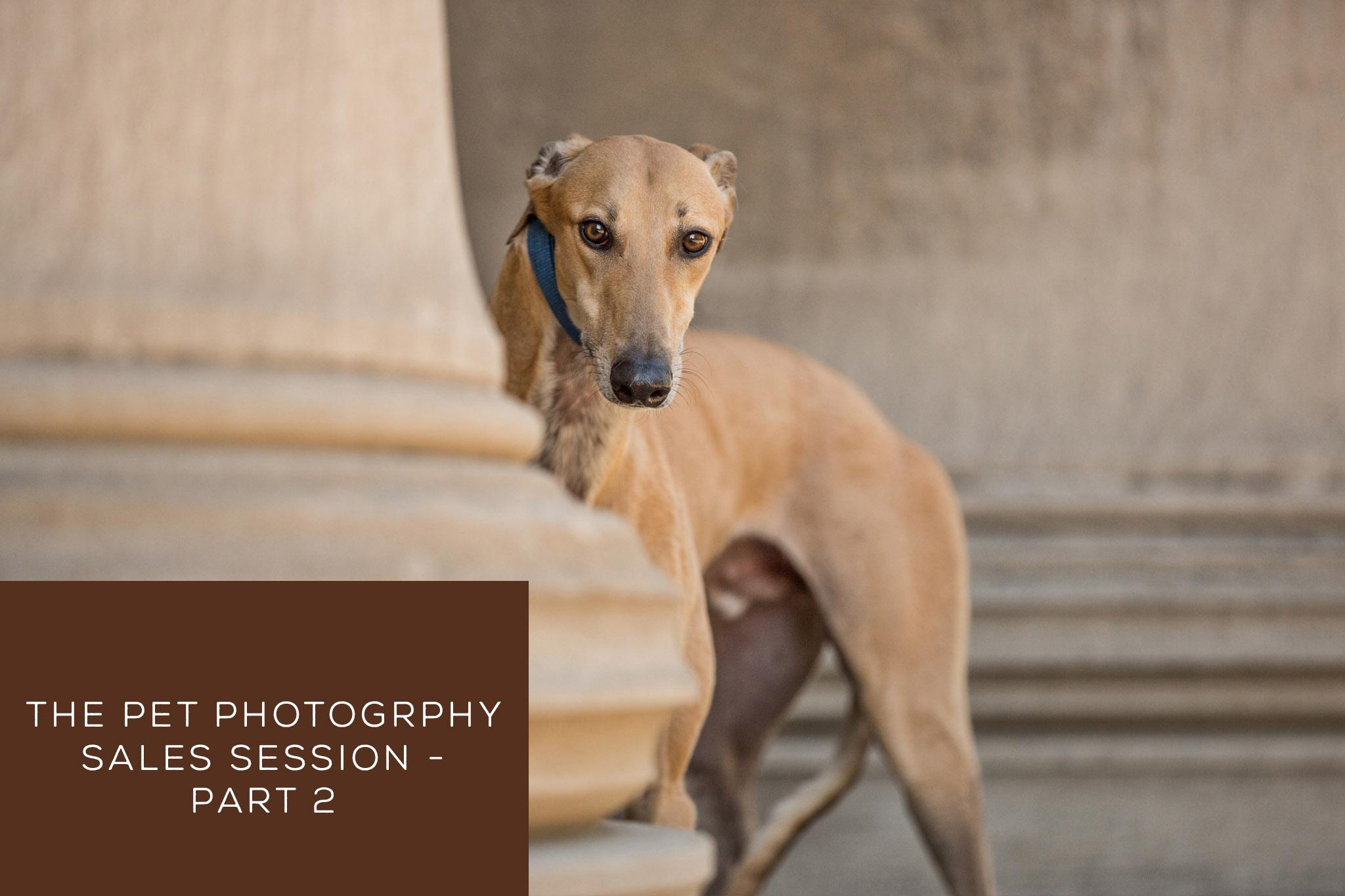 The Pet Photography Sales Session – Part 2