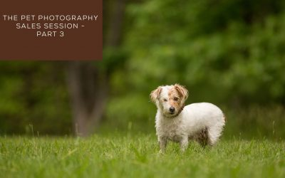 The Pet Photography Sales Session – Part 3
