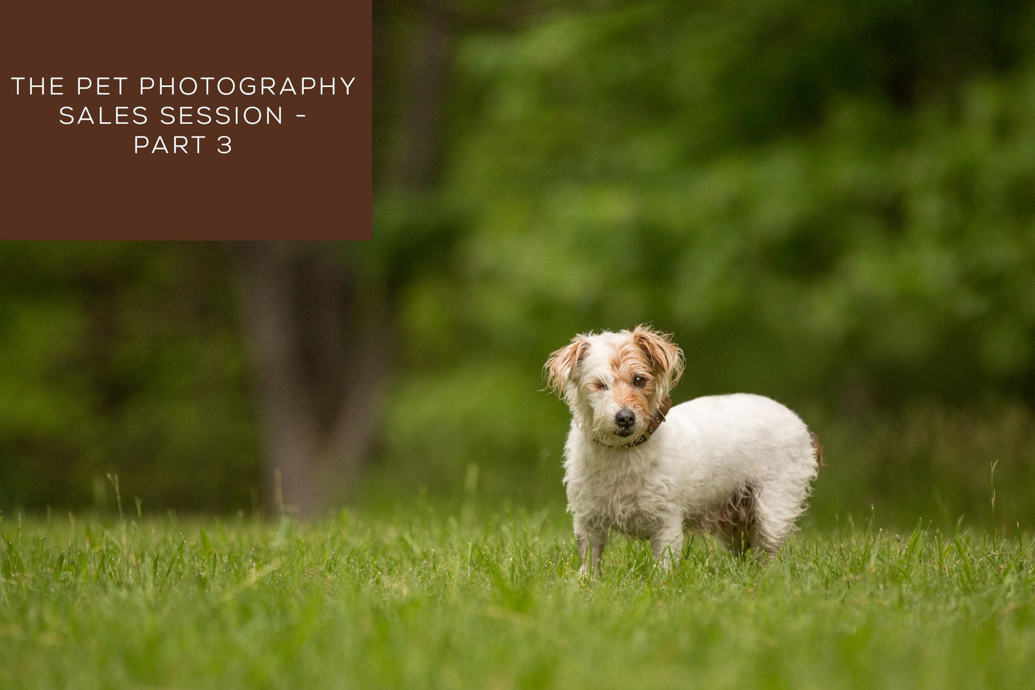 The Pet Photography Sales Session – Part 3
