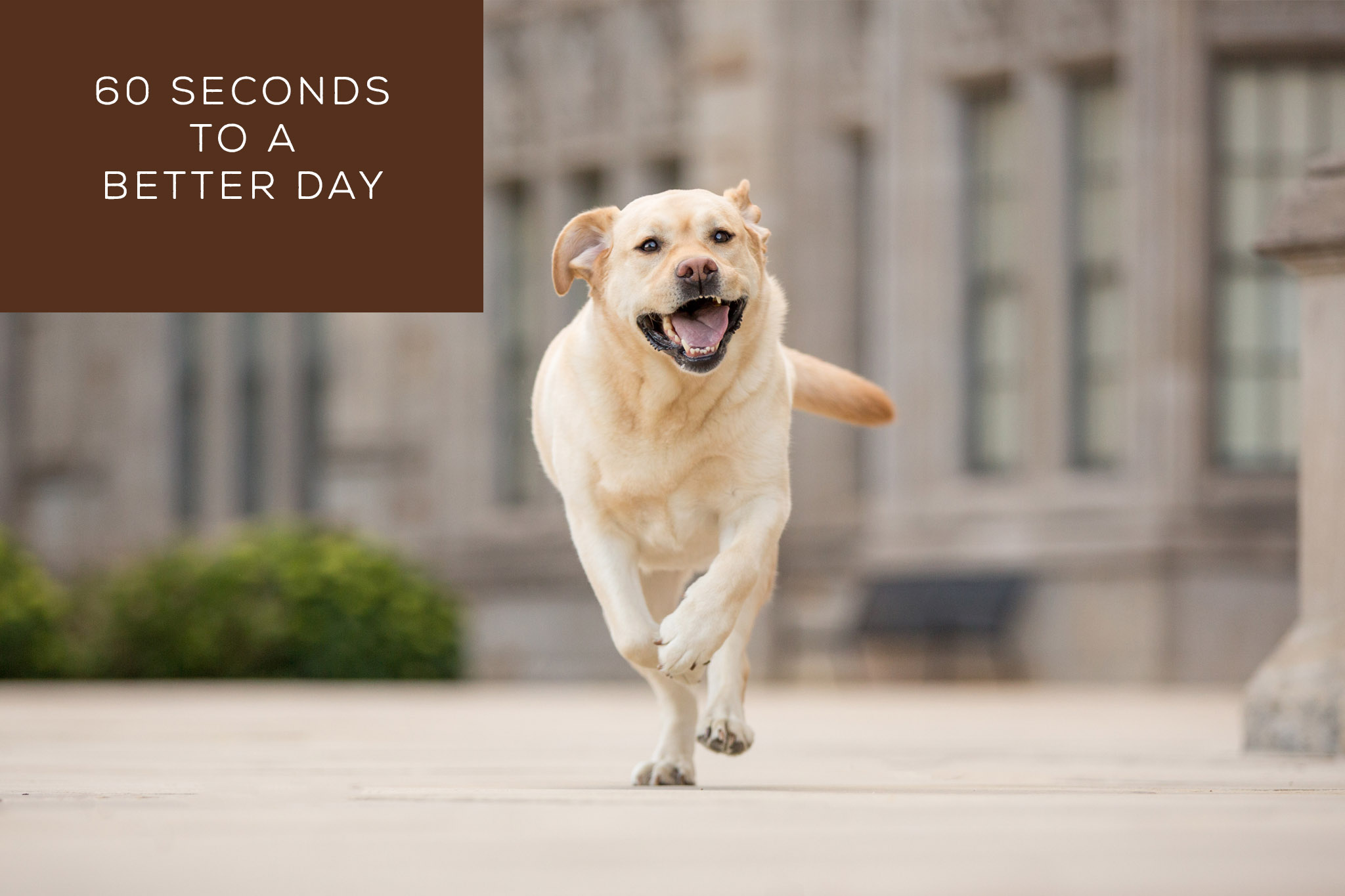 60 Seconds to a Better Day