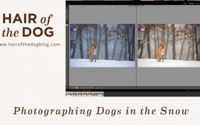 Photographing Dogs in the Snow