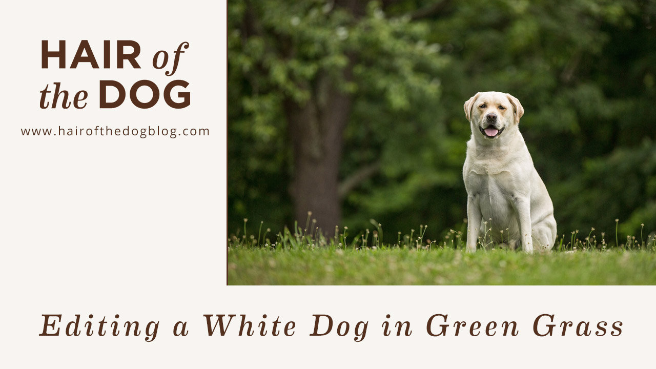 Editing a White Dog in Green Grass