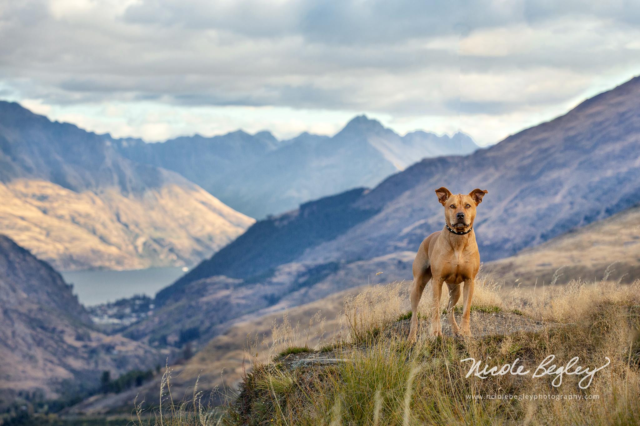 Mountaintop Nicole Begley-207