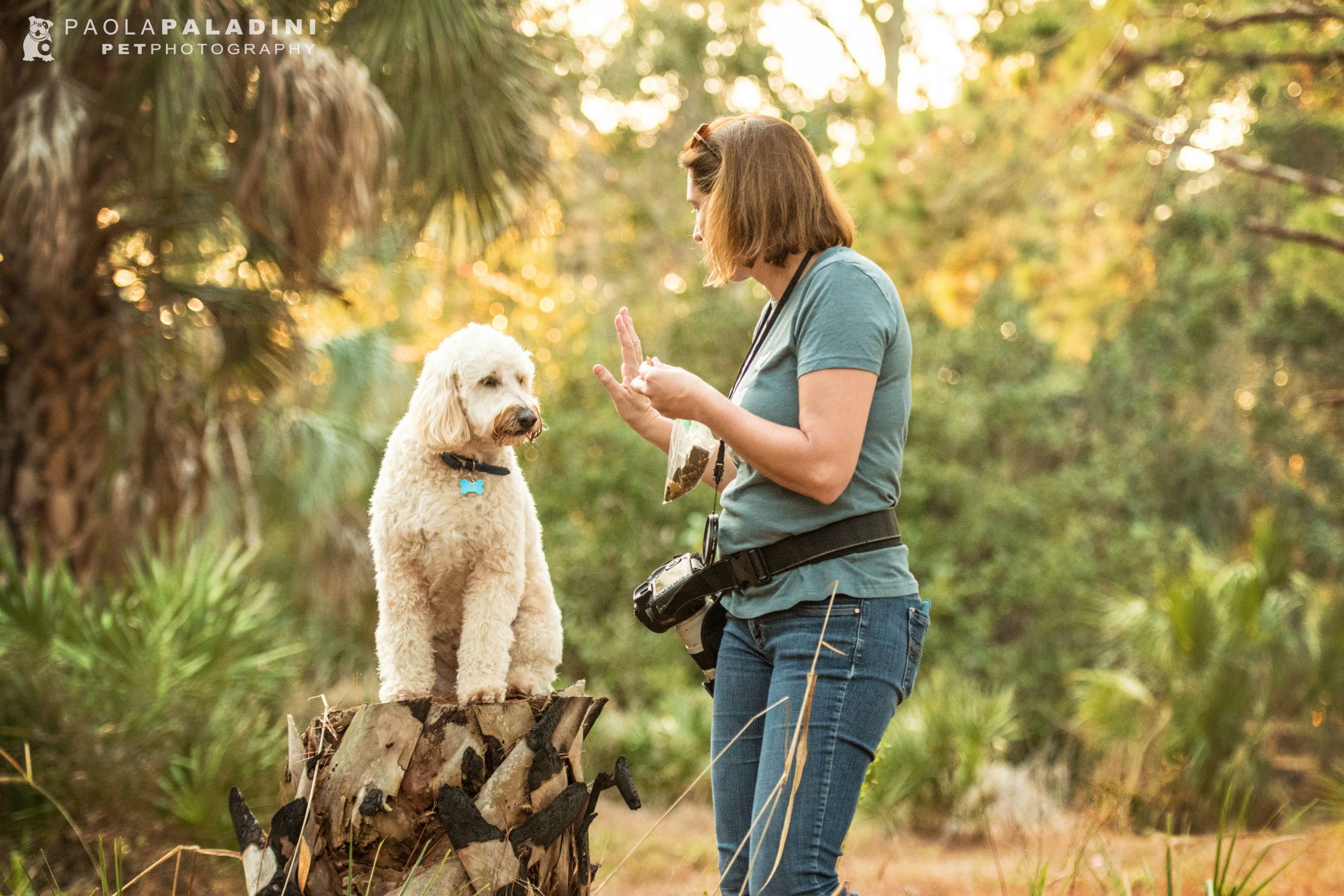 the business of pet photography course