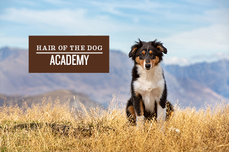 hair-of-the-dog-academy-2