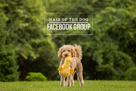 hair-of-the-dog-facebook-group-2