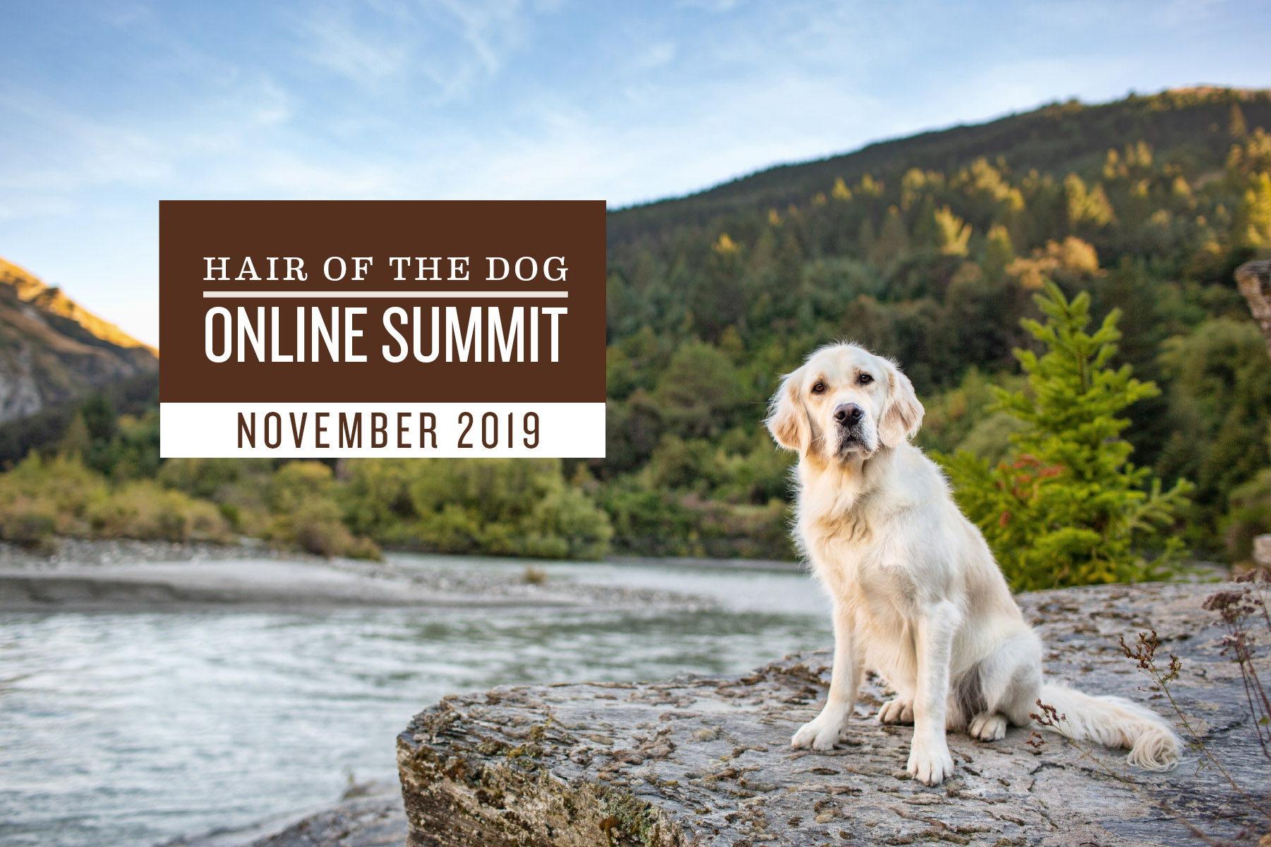 pet photography course online summit