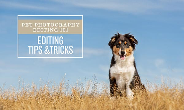 pet photography post-processing course