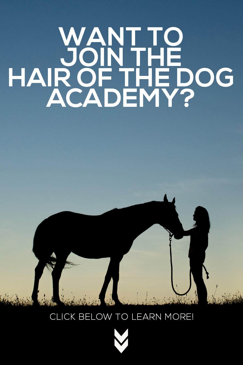 Hair of the Dog Academy